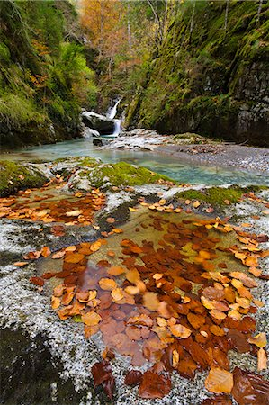 France, Aquitaine, Pyrenees Atlantiques, Fallen leaves collected in rock pots along Bious river in Ossau valley Stock Photo - Rights-Managed, Code: 877-08026610