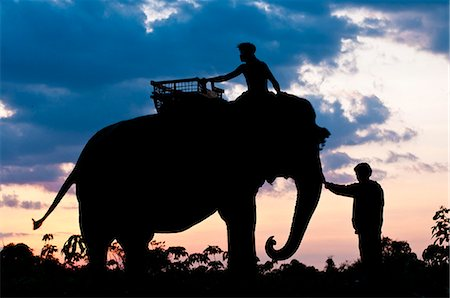 road landscape - Camdodia, Ratanakiri Province, the Okatchang path, the mahouts lead the elephants back to their home Stock Photo - Rights-Managed, Code: 877-08128316
