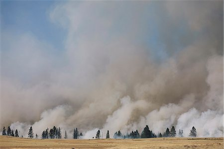 smoke - A large forest fire near Ellensburg in Kittitas county. Smoke rising above trees. Stock Photo - Rights-Managed, Code: 878-07442487