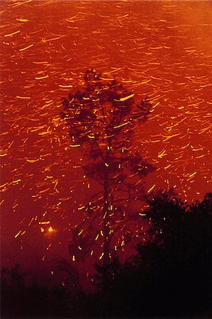 flame - A spreading wildfire in the forests of the Santa Cruz Mountains, Monterey Bay, California, USA Stock Photo - Rights-Managed, Code: 878-07442549