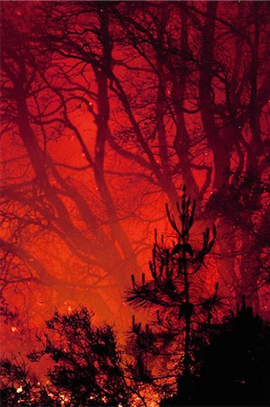 flame - A spreading wildfire in the forests of the Santa Cruz Mountains, Monterey Bay, California, USA Stock Photo - Rights-Managed, Code: 878-07442550