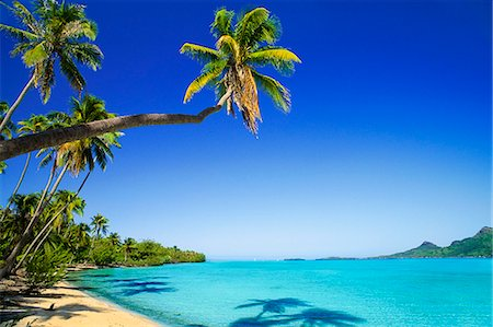 french polynesia - Palm lined beach, Bora Bora, Tahiti Stock Photo - Rights-Managed, Code: 878-07590736
