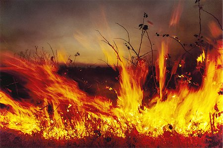 flame - Brush fire Okavango Delta, Botswana Stock Photo - Rights-Managed, Code: 878-07590887