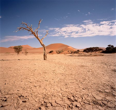 Desert Sossusvlei, Namib Desert Namibia Stock Photo - Rights-Managed, Code: 873-06440277