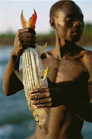 Man Holding Tiger Fish Outdoors Zambezi River, Zimbabwe, Africa Stock Photo - Rights-Managed, Code: 873-06440396