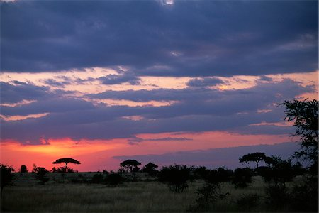 serengeti national park - Sunset over Field with Acacia Trees, Serengeti, Tanzania Stock Photo - Rights-Managed, Code: 873-06440431