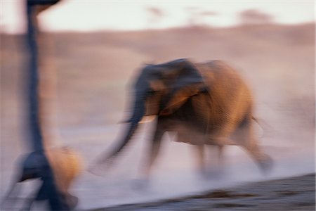 endangered animal - Blurred View of African Elephant Running Africa Stock Photo - Rights-Managed, Code: 873-06440496