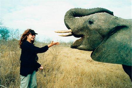 Woman Feeding Elephant, Hoedspruit, Mpumalanga, South Africa Stock Photo - Rights-Managed, Code: 873-06440768