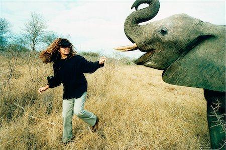 Woman Feeding Elephant, Hoedspruit, Mpumalanga, South Africa Stock Photo - Rights-Managed, Code: 873-06440769