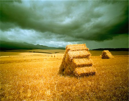 Hay Bales in Landscape South Africa Stock Photo - Rights-Managed, Code: 873-06440772