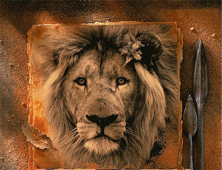 Photograph of Lion with Spear Heads Stock Photo - Rights-Managed, Code: 873-06752684