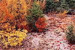 Goose Bay Area in Autumn Newfoundland and Labrador, Canada
