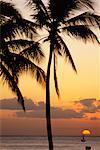 Silhouette de palmiers au crépuscule Hawaii