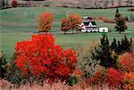 Farm in Autumn Millville, New Brunswick, Canada