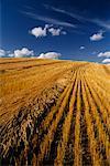 Field near Hussar Alberta, Canada