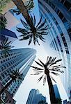 Palmen und Gebäude Los Angeles, Kalifornien, USA