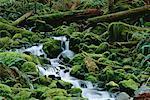 Soleduck River Tributary Olympic National Park Washington, USA