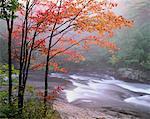 Oxtongue River et des arbres en automne Muskoka zone, Ontario, Canada