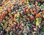 Autumn Foliage Rouge River Park, Ontario, Canada