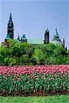 Édifices du Parlement et des tulipes, Ottawa, Ontario, Canada