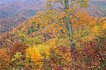 Vue de paysage de l'automne du Blue Ridge Parkway North Carolina, USA