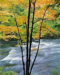 Oxtongue River in Autumn, Muskoka Region, Ontario, Canada