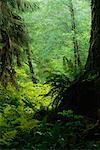 North End West Coast Trail Pacific Rim Nationalpark, British Columbia, Kanada