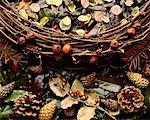 Cônes de pin, des feuilles et des baies séchées