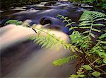 Nymphe de libellule sur branche près de cours d'eau, fleuve Columbia Gorge Oregon, USA