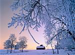 Hoar Frost at Dusk, near Edmonton, Alberta, Canada
