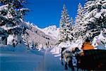Sleigh Ride Austria