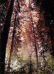 Prairie Creek Redwoods State Park California, USA