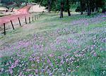 Fleurs sauvages El Dorado Hills, Californie, USA