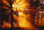 Lumière du soleil à travers les arbres Riverfield, Québec, Canada
