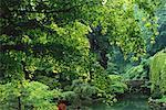 Japanese Garden Portland, Oregon, USA