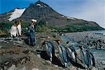 King Penguins près de Salisbury Plain, Géorgie du Sud, Antarctique