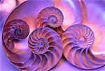 Close-Up of Nautilus Shells