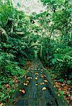 Path Through Forest Amazon Basin, Napo, Ecuador