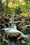 Klaxton Creek, en automne, Haliburton, Ontario, Canada