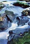 Gros plan des roches et l'eau Klaxton Creek, Haliburton, Ontario, Canada