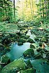 Klaxton Creek, Haliburton, Ontario, Canada