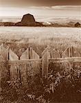 Ferme abandonnée près de Dorothy, Alberta, Canada