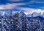 Chute de neige fraîche sur les arbres et les montagnes, le Parc National Banff, Alberta, Canada