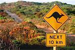 Kangaroo Crossing Sign Kangaroo Island South Australia, Australia