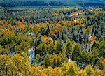 Poplar and Spruce Trees in Autumn Kananaskis Country Alberta, Canada