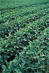 Soja récolte (Ontario), Canada