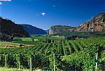 Vue d'ensemble du vignoble de l'Okanagan en Colombie-Britannique, Canada