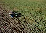 Vue aérienne de la récolte de pommes de terre Carberry, Manitoba, Canada