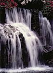 Chute d'eau et arbres Maui, Hawaii, USA