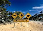 Animal Crossing Signs near Road Nullarbor Plain, Australia